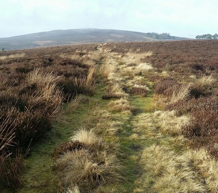 The Earth Faeries have wanderlust - out for a day on th moors in Wales